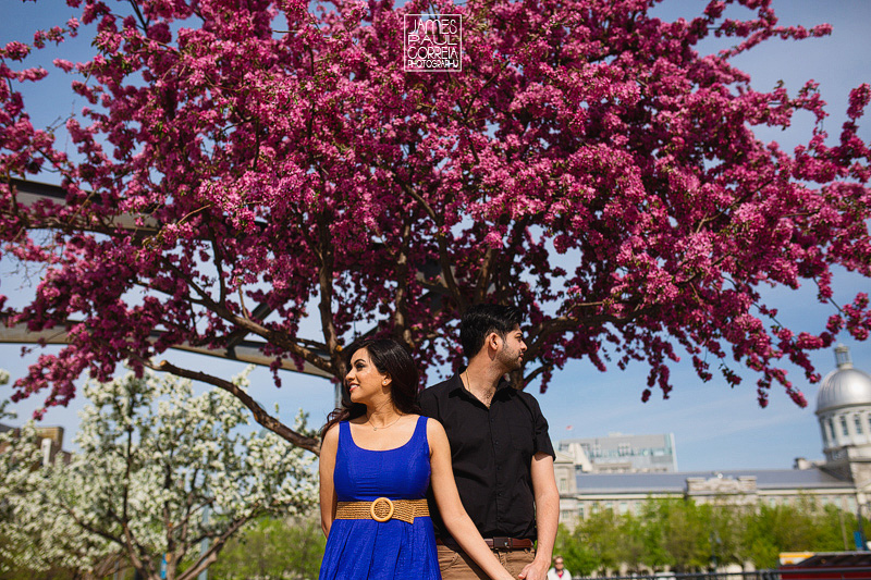 cherry blossoms engagement photography